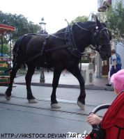 Draft Horse Pulling Cart by HKstock