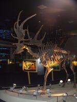 Naturalis - Megaloceros 2 by SSJGarfield