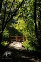 Pathway I by kayaksailor