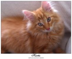 My new kitten by Emberiza