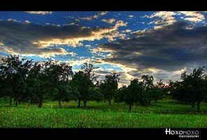 Green cuted Sky by hoxomoxo