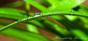 Drops, just drops...12 by MarcZingg