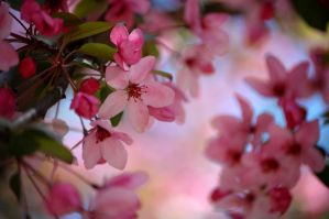 Pink paradise by Adsarta