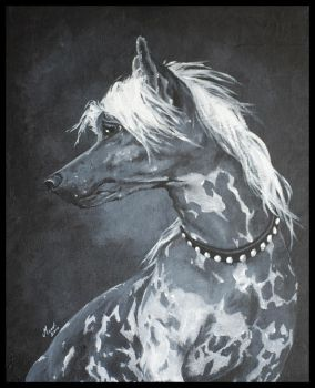 Work 9. Chinese crested by mooni