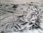 Water Lily by Dante947