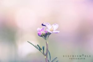 The fly by buschermoehle-photo
