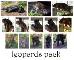 jaguar pack by syccas-stock