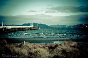 Petone on a windy day by natzcv