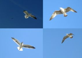 Animals - seagulls by Stock-gallery
