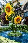 Sunflowers in Water by TheBelfig