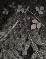 Pine's branches and plant by yuushi01