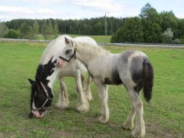 Mare and her foal 4 by Temansha