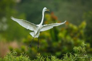 .:Tree Top Landing:. by RHCheng