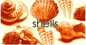 Shells brushes by dawn-at-the-lake