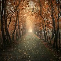 Autumn alley II by Alshain4
