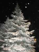 Snow fir tree forest night winter by Redilion