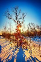 golden winter 2 by Ibicusun