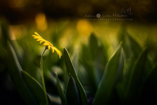 yellow flower by AdrianaKH-75