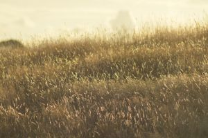 Grass by idyle