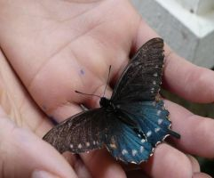 butterfly 3 by Defeet