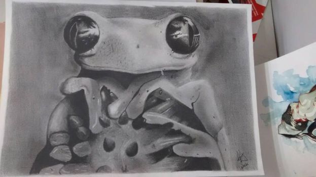Frog by Admirath