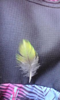 Green Bell Bird feather Photo by N1GHT0WL5