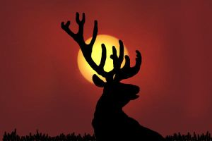 Elk in the Sunset by Aasix