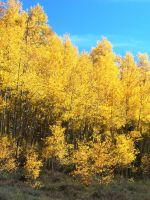 Fall Colors: The Aspen Grove, Pearl Pass by Shadow848327
