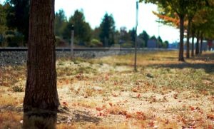 Autumn Trees by KingPinPhotography
