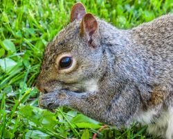 My Name is Squirrel by CRGPhotography