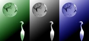 Egret Triptych by stevecliff