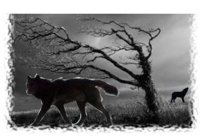 Wolves of night by XxFlameFrost101xX