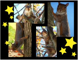 Squirrel Walpaper by SCT-GRAPHICS