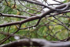 Water Drops by GracefulEssence