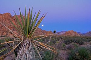 The Desert's Moon Light by designing-Life