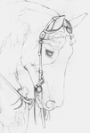 American Paint Horse SKETCH by Yankeestyle94