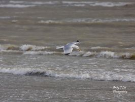 Flying low by ATLEE-Photography