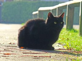 Just a cat by Lishu