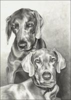 Weims by nikkiburr