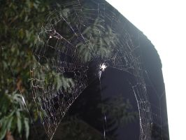 Web1 by Tortured-Raven-Stock