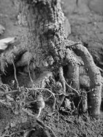 root by DR13agoslav