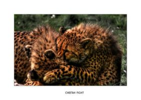 Cheetah fight HDR by Dr-Koesters