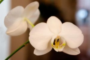 I Love Orchids III by LDFranklin