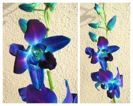 Blue Orchid by Piombo