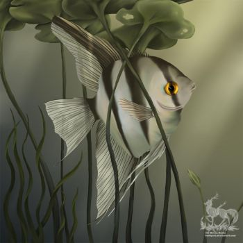 angelfish illustration by true-crystalwolf