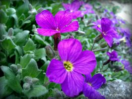 Spring Flower 2012 - 20 by Ingnition