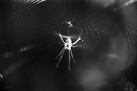 Spider on 35mm by thetooth