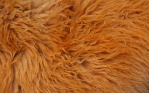 Fur Texture 8 by BFstock