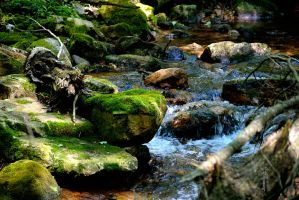 Trout Stream by sioranth