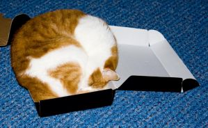 Cat in a box by psyviant